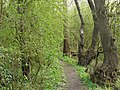 Path next to the Nutbook Trail - geograph.org.uk - 1305575.jpg