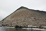 Paulet Island (24601309846).jpg