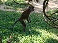 Penang Botanic Gardens (49).JPG