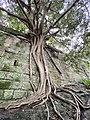 Photo of a tree taken while walking .jpg