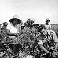 PikiWiki Israel 1173 Kibutz Gan-Shmuel ks2- 3 גן-שמואל-בגן הירק 1945-50.JPG
