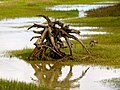 Pinckney Island National Wildlife Refuge (5957941925).jpg
