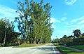 Pine Tree Drive Miami Beach - John S Collins 01.jpg