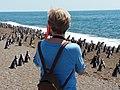 Pingüinos sobre la playa.jpg