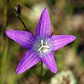 Plant in Laukaa 3.jpg