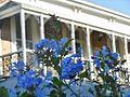 Plumbago Balcony (8626367246).jpg