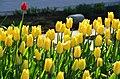Poertschach Blumenstrand vor Parkhotel Tulpenbeet 28042013 124.jpg