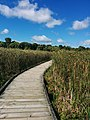 Point pelee national park.jpg