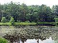 Pond near the tori to the Togakushi shrine.jpg