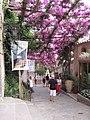 Positano Flower Walkway - panoramio.jpg