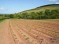 Potato fields, Pease Bridge. - geograph.org.uk - 233693.jpg