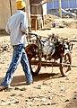 Poulets bien ligotés pour le marché de Mopti.jpg