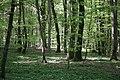 Prästaskogen may 2018-1.jpg