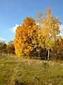 Praha, Jinonice, podzimní stromy.jpg