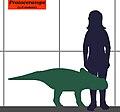 Protoceratops-human size.JPG