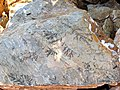 Pseudofossil-greece-alonisos-0a.jpg