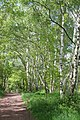 Public bridleway in Sherwood Forest - geograph.org.uk - 1330824.jpg