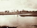 Queensland State Archives 2313 Grazing land with lagoon sheep and homestead at Jimbour Station Darling Downs 1897.png