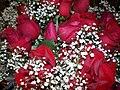 RED ROSES 4 (2791762442).jpg