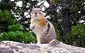 RMNP rodent.JPG