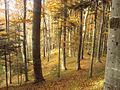 RO BV Forest 1.jpg