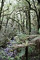 Rain Forest 2 (30849851433).jpg