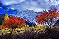 Rakaposhi Showing colours.jpg
