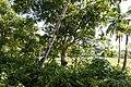 Rancho Español 32000, Dominican Republic - panoramio (15).jpg