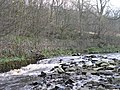 Rapids on the East Allen - geograph.org.uk - 618754.jpg