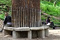Reading tree, Jardin des Plantes de Paris, 2011.jpg