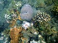 Recodo Underwater.jpg