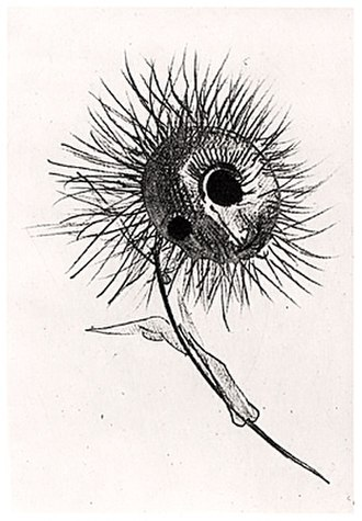 The Flowers of Evil (manga) - The illustration of a flower by Odilon Redon in Les Fleurs du Mal which Oshimi modified for the manga
