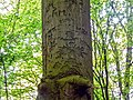 Reichsadler am Baum im Vieburger Gehölz Kiel (2) retuschiert.jpg