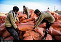Relief to Flood-affected ranchers by the Barakat Foundation & Basij02.jpg