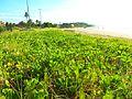 Restinga Praia Grande Fundão.JPG