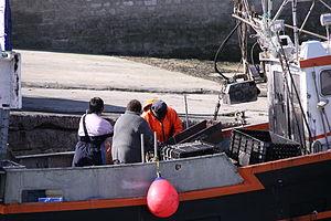 Retour de la pêche à la seiche du fileyeur Jason IV (8).JPG
