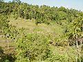 Rice terrace of Tegallalan 200507-1.jpg