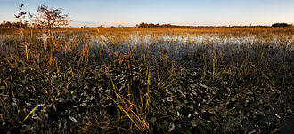 """The Everglades: River of Grass - """"River of Grass"""" in the Everglades"""