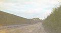 Roadside Hedge (4769154114).jpg
