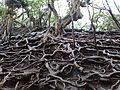 Roots on surface.jpg