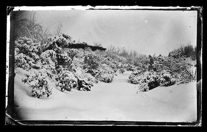 File:Rose Arbor from Below, Prospect Park, Brooklyn, ca. 1872-1887. (5833495568).jpg