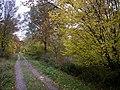 Rowney wood main ride. - geograph.org.uk - 280034.jpg