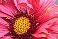 Royal Botanic Garden Melb Vol 02 (53891484).jpeg