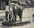 Royal White Elephant at the Grand Palace.jpg