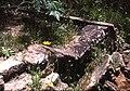 Ruins Wilson Glen Woodford.jpg