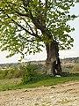 Südhang Ettersberg Naturschutzgebiet Kastanienbaum.jpg
