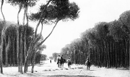 Pine Forest of Beirut, 1914 SL 1914 D052 among the pine groves of the cape of beirut.jpg