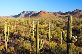 Saguaro National Park - Flickr - Joe Parks.jpg