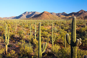 Sonoran Desert - Saguaro National Park, Arizona