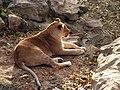 Saint Louis Zoo 033.jpg